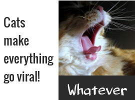 Cats Go Viral image